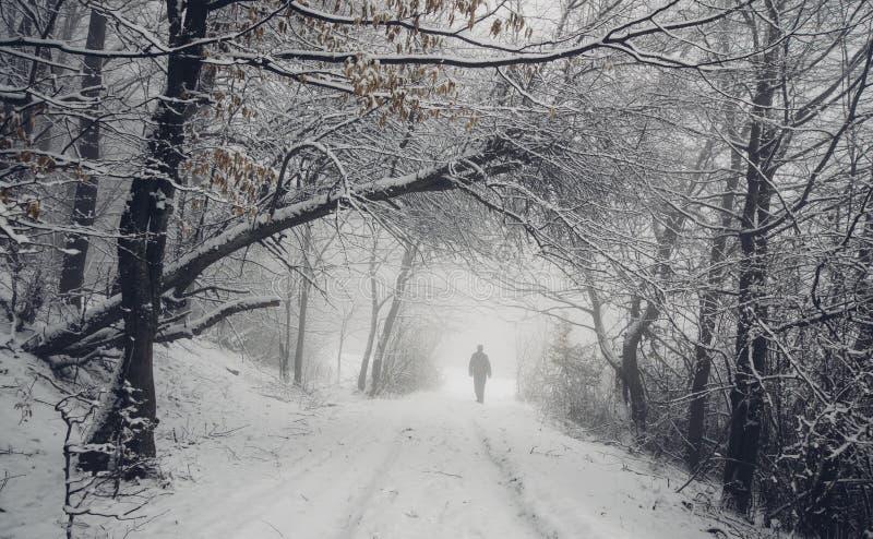 Άτομο στο δρόμο στα χειμερινά ξύλα στοκ εικόνες