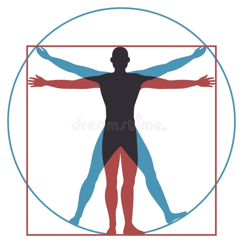 Άτομο Vitruvian Τέλειες αναλογίες ανατομίας ανθρώπινων σωμάτων Leonardo Da Vinci στον κύκλο και το τετράγωνο Διανυσματική σκιαγρα απεικόνιση αποθεμάτων