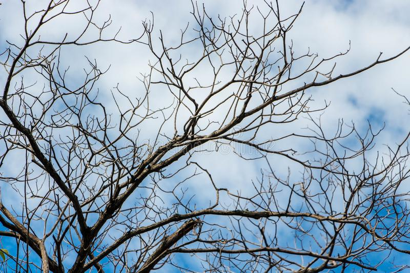 Άφυλλα δέντρα στη περίοδο ανομβρίας στοκ φωτογραφίες με δικαίωμα ελεύθερης χρήσης