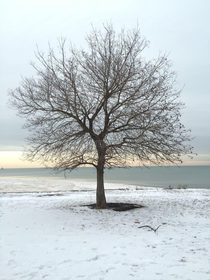 Άφυλλο δέντρο το χειμώνα στην παραλία στοκ εικόνες