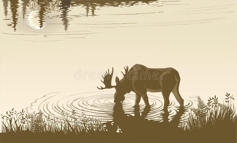 Άλκες στο πόσιμο νερό απεικόνιση αποθεμάτων