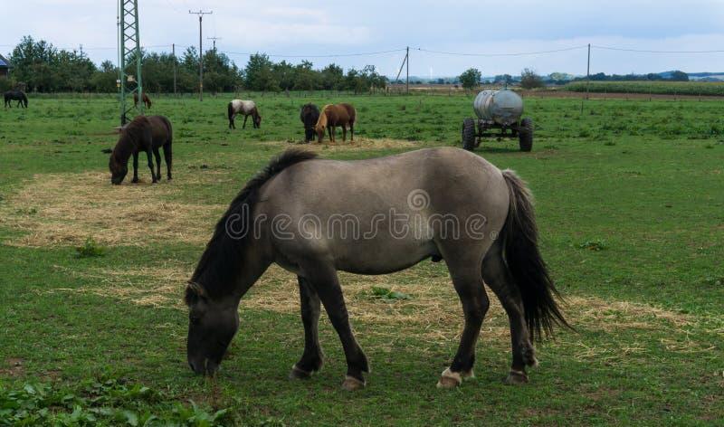 Άλογα ζώα αγροκτημάτων στο λιβάδι στοκ εικόνες