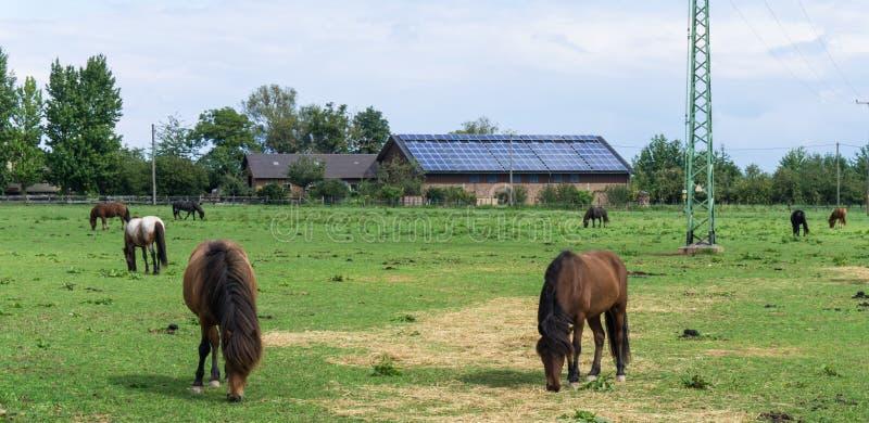 Άλογα ζώα αγροκτημάτων στο λιβάδι στοκ φωτογραφίες με δικαίωμα ελεύθερης χρήσης