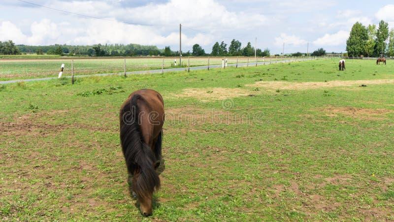 Άλογα ζώα αγροκτημάτων στο λιβάδι στοκ εικόνα με δικαίωμα ελεύθερης χρήσης