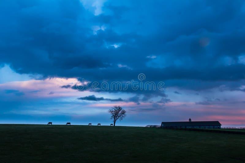 Άλογα και σιταποθήκη σκιαγραφιών ηλιοβασιλέματος του Κεντάκυ στοκ φωτογραφίες
