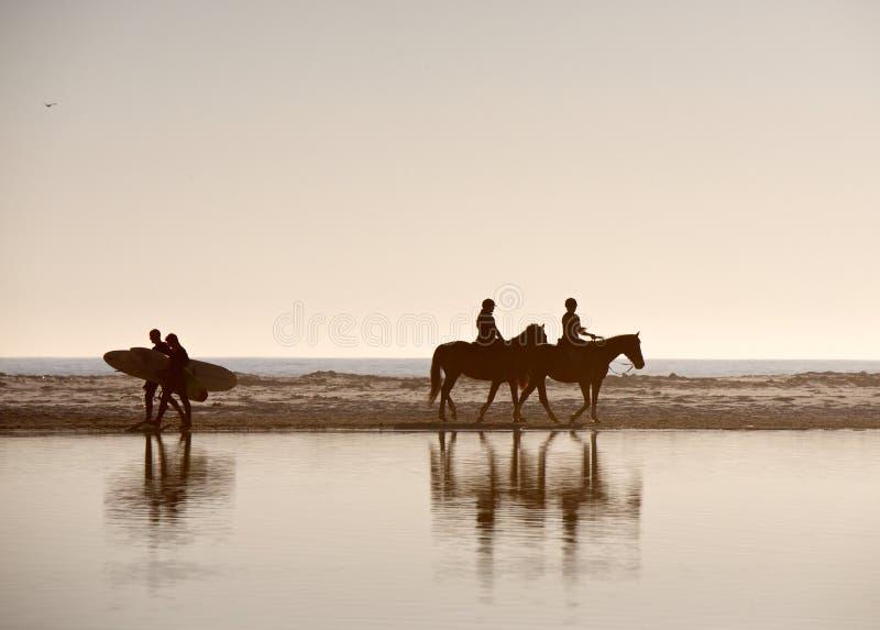 Άλογα και Surfers στοκ φωτογραφία με δικαίωμα ελεύθερης χρήσης