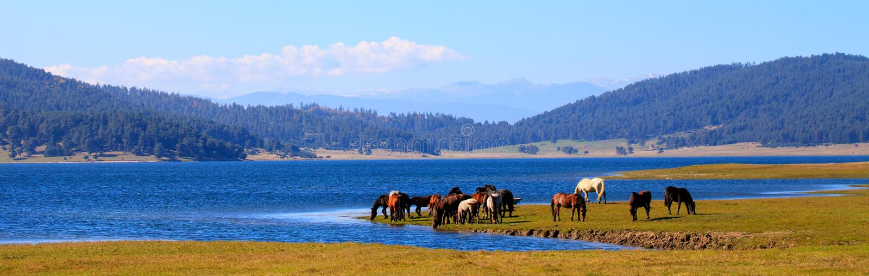 Άλογα κοντά στη λίμνη στοκ εικόνες με δικαίωμα ελεύθερης χρήσης