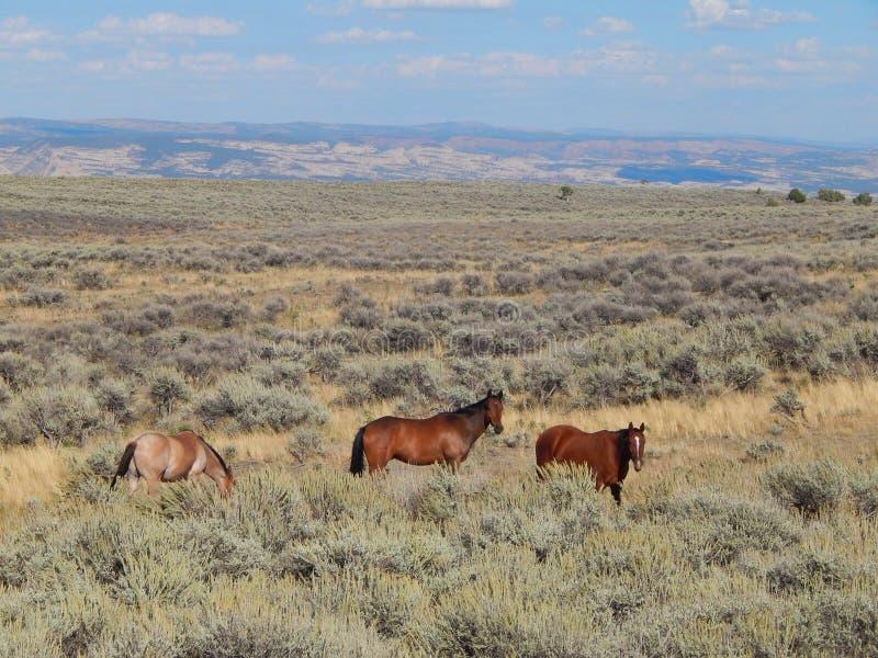 Άλογα ομορφιάς χαλκού κοντά στο δεινόσαυρο, Γιούτα στοκ εικόνα
