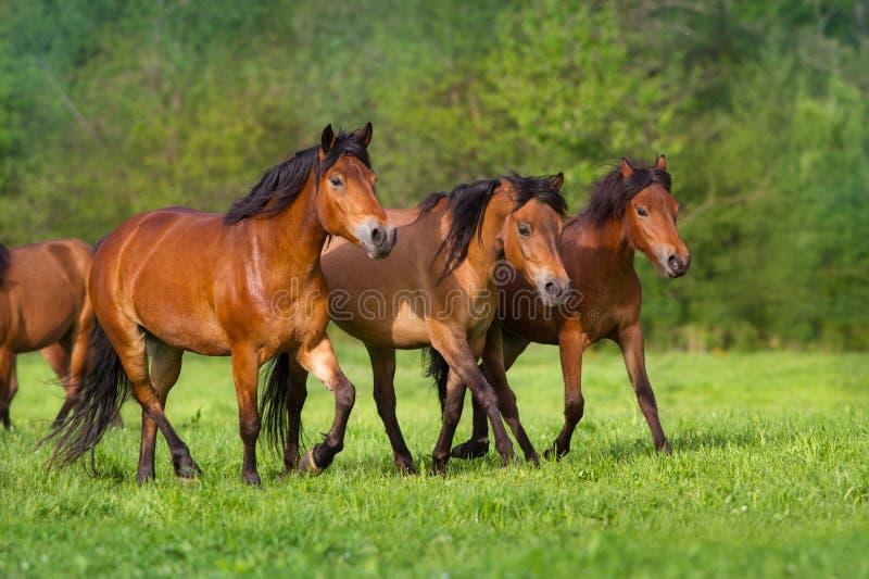 Άλογα που οργανώνονται στο λιβάδι στοκ φωτογραφία με δικαίωμα ελεύθερης χρήσης