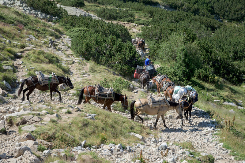 Άλογα σε ένα βουνό στοκ φωτογραφίες
