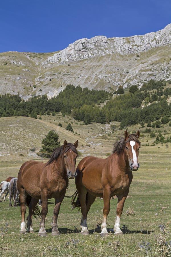 Άλογα στα βουνά στοκ φωτογραφία με δικαίωμα ελεύθερης χρήσης