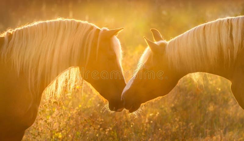Άλογα στην ανατολή στοκ εικόνες με δικαίωμα ελεύθερης χρήσης