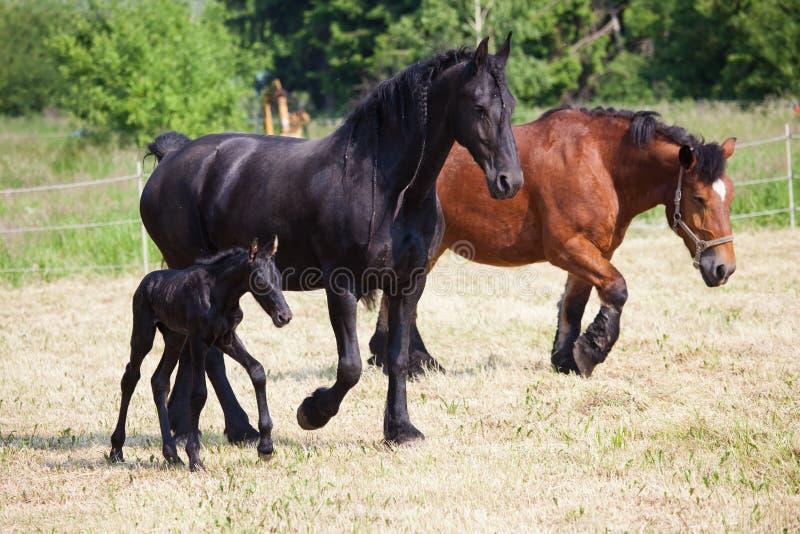 Άλογα στη μάντρα στοκ φωτογραφίες με δικαίωμα ελεύθερης χρήσης