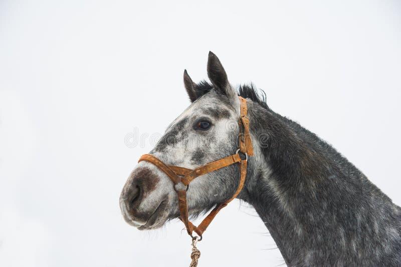 Άλογα στο αγρόκτημα το χειμώνα στοκ φωτογραφία με δικαίωμα ελεύθερης χρήσης