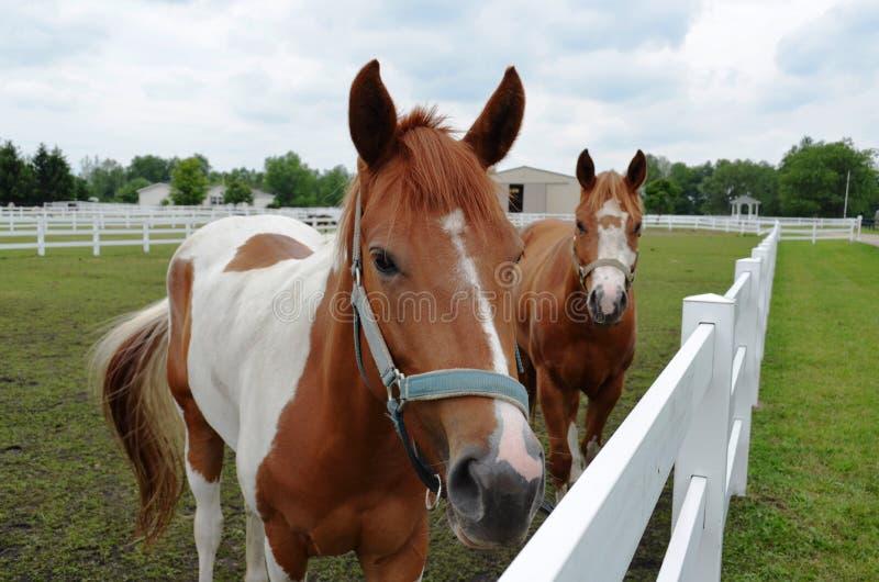 Άλογα στο λιβάδι στοκ φωτογραφία με δικαίωμα ελεύθερης χρήσης