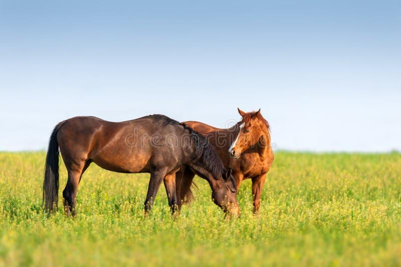 Άλογα στο λιβάδι στοκ εικόνα με δικαίωμα ελεύθερης χρήσης