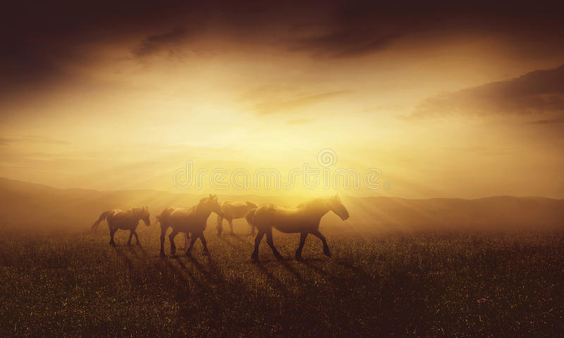 Άλογα στο σούρουπο στοκ εικόνα με δικαίωμα ελεύθερης χρήσης