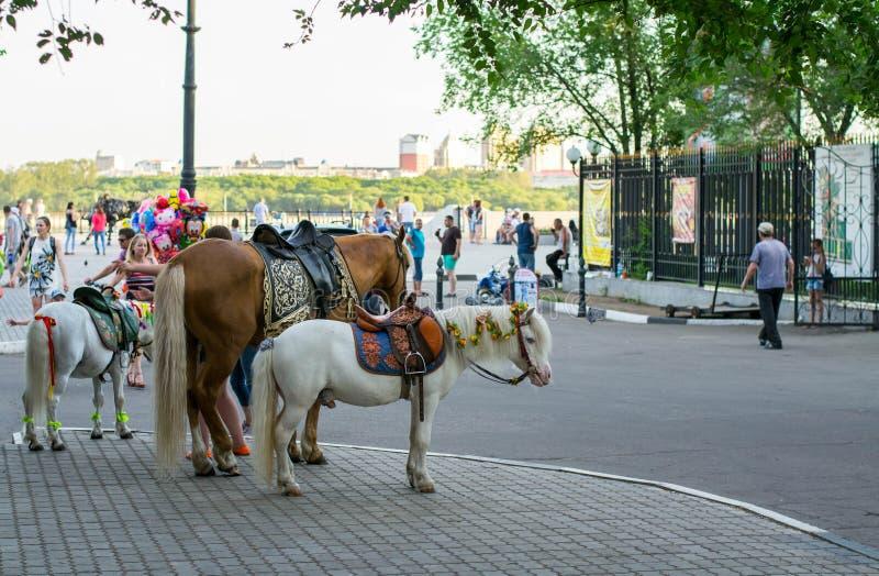 Άλογο και δύο πόνι που περιμένουν κάποιο που οδηγά στοκ φωτογραφία με δικαίωμα ελεύθερης χρήσης