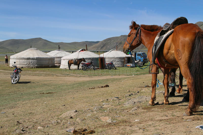 Άλογο και yurts στοκ εικόνες