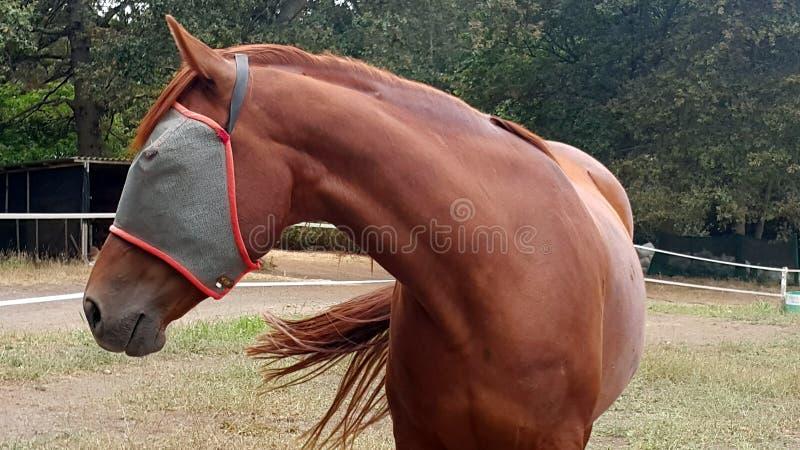 Άλογο με τον ιστό μυγών στοκ φωτογραφίες με δικαίωμα ελεύθερης χρήσης