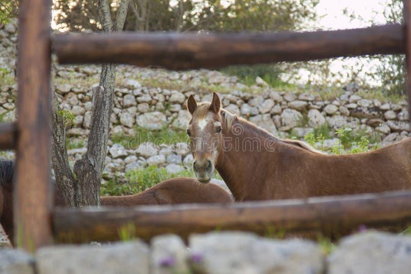 Άλογο που εξετάζει με στοκ εικόνα με δικαίωμα ελεύθερης χρήσης