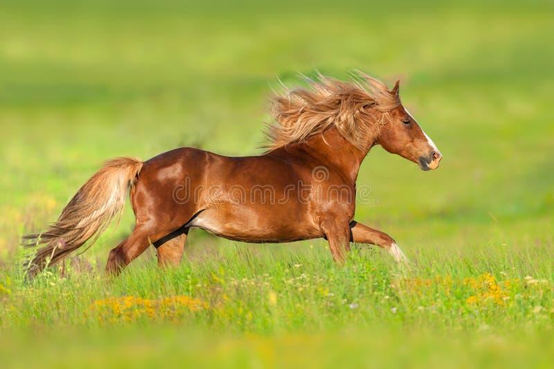 Άλογο που οργανώνεται κόκκινο στα λουλούδια στοκ εικόνες