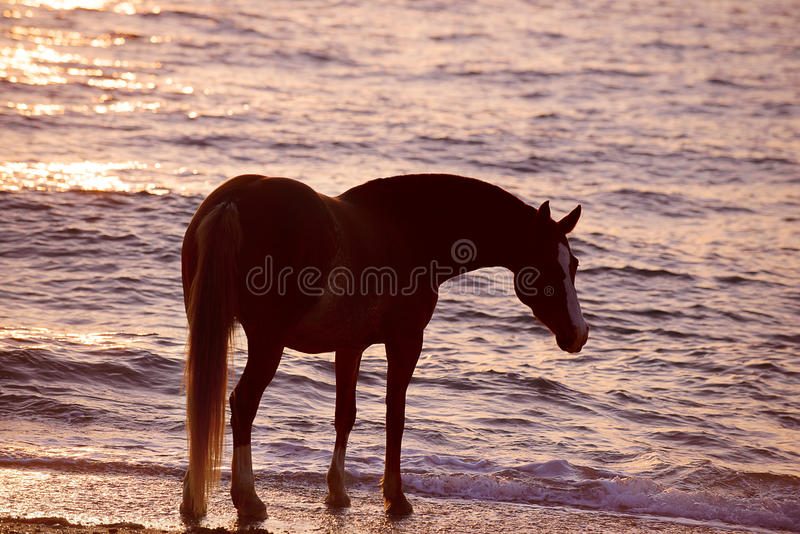 Άλογο που τρέχει μέσω του νερού στοκ εικόνα