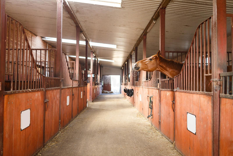 Άλογο σε έναν σταύλο στοκ εικόνες με δικαίωμα ελεύθερης χρήσης