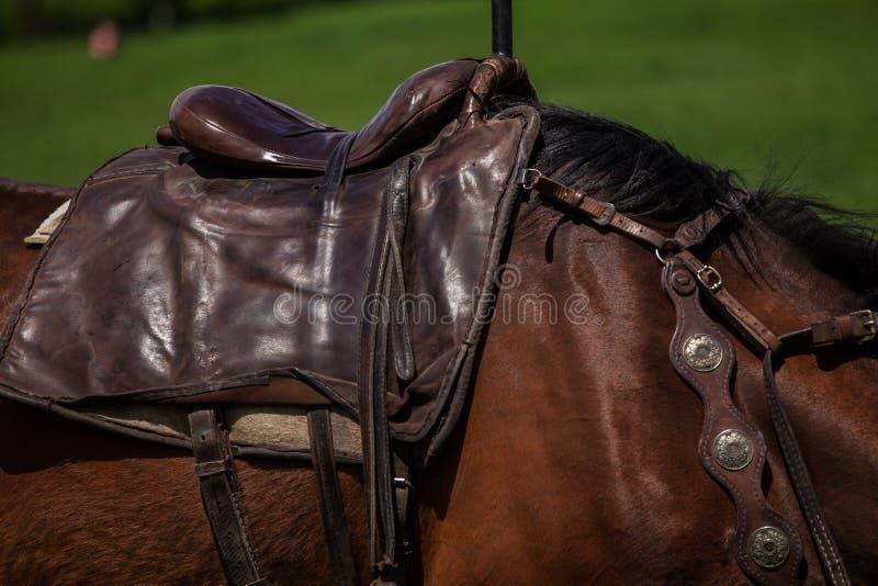 Άλογο σελών στοκ εικόνες με δικαίωμα ελεύθερης χρήσης