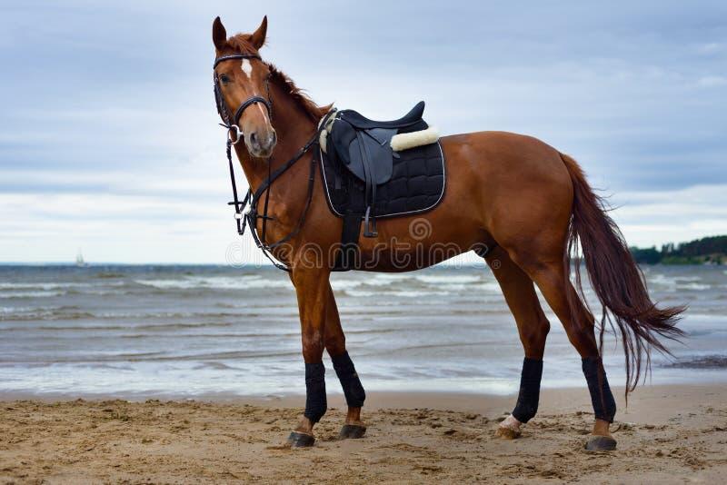 Άλογο στην ακτή στοκ φωτογραφία με δικαίωμα ελεύθερης χρήσης