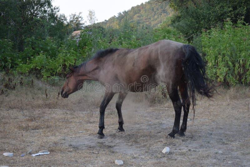 Άλογο στη σκόνη στοκ εικόνα