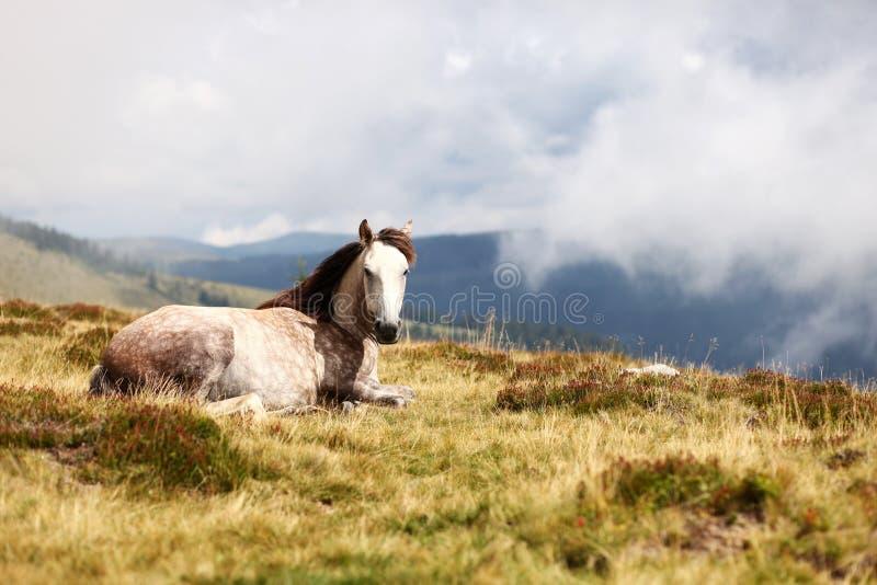 Άλογο στη χλόη βουνών στοκ εικόνα