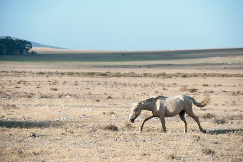Άλογο στον τομέα στοκ εικόνες με δικαίωμα ελεύθερης χρήσης