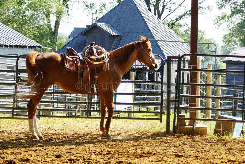 Άλογο στους σταύλους στοκ φωτογραφία με δικαίωμα ελεύθερης χρήσης