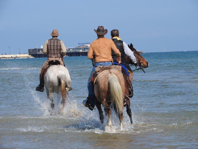 Άλογο στο νερό στοκ φωτογραφίες