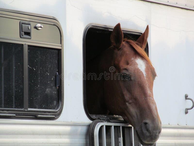 Άλογο στο ρυμουλκό στοκ εικόνα