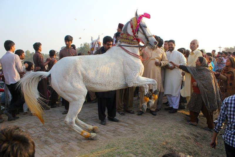 Άλογο χορού γάμου στοκ εικόνα με δικαίωμα ελεύθερης χρήσης