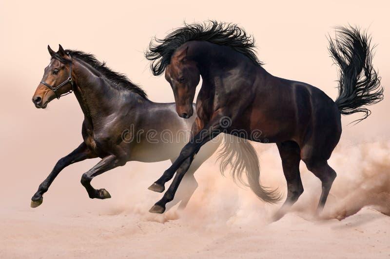 Άλογο δύο στη σκόνη στοκ εικόνα με δικαίωμα ελεύθερης χρήσης