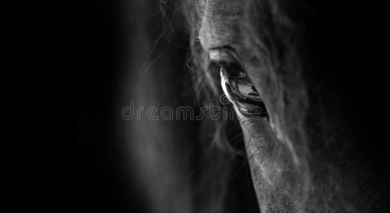 Download Άλογο στοκ εικόνα. εικόνα από eyelash, καλλιτεχνικό, κοντά - 35001631