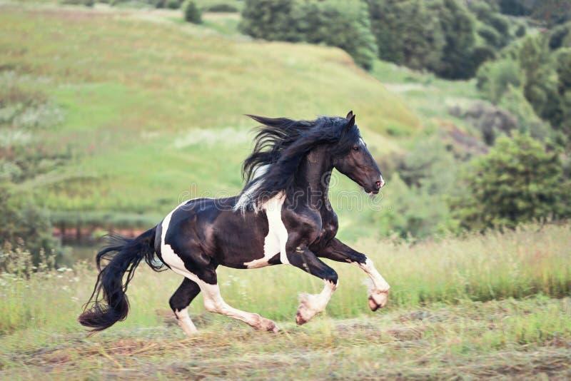 Άλογο gallopin στον τομέα στοκ εικόνα με δικαίωμα ελεύθερης χρήσης