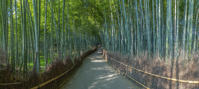 Άλσος μπαμπού στο Κιότο στοκ εικόνα με δικαίωμα ελεύθερης χρήσης