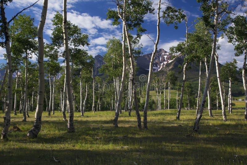 Άλσος της Aspen και άποψη των βουνών του San Juan, Hastings Mesa, Ridgway, Κολοράντο, ΗΠΑ στοκ φωτογραφίες με δικαίωμα ελεύθερης χρήσης