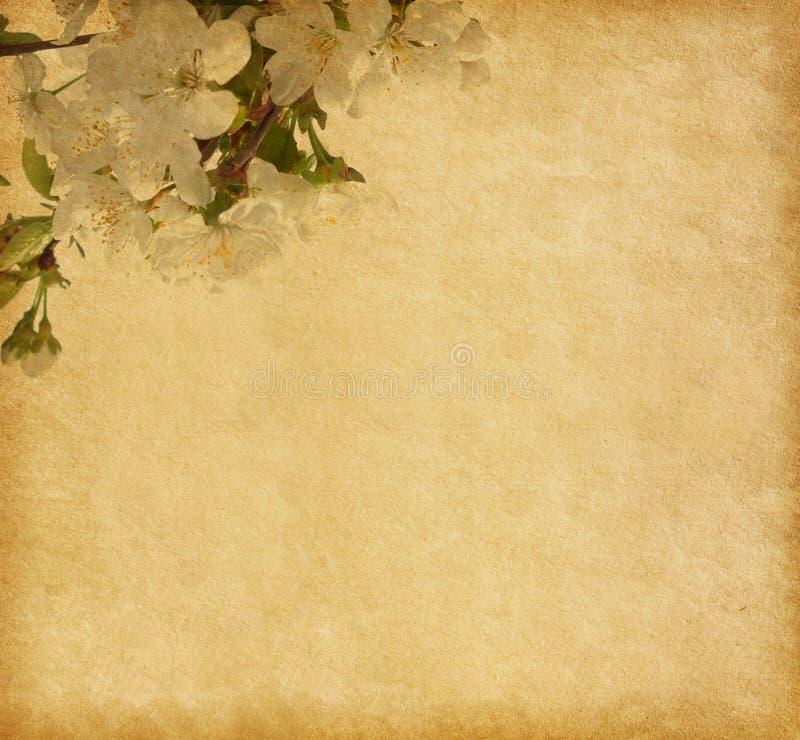 Έγγραφο με το άνθος κερασιών. στοκ εικόνα με δικαίωμα ελεύθερης χρήσης