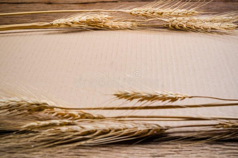 Έγγραφο χαρτονιού με το σιτάρι κριθαριού στον ξύλινο πίνακα στοκ εικόνα