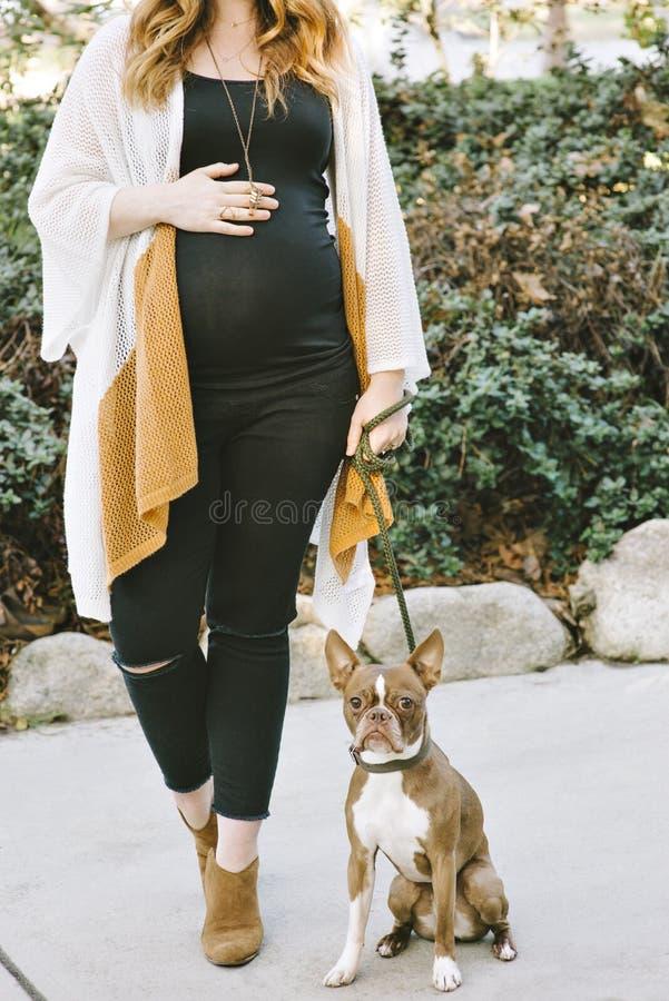 Έγκυες άσπρες θηλυκές στάσεις εκτός από τα χέρια σκυλιών της Pet τεριέ της Βοστώνης της στο καλύτερο φίλο κοιλιών στοκ εικόνες με δικαίωμα ελεύθερης χρήσης
