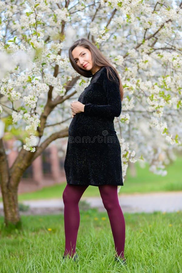 Έγκυο brunette στο ανθισμένο πάρκο Το brunette σε ένα σκοτεινό φόρεμα θέτει στον ανθίζοντας οπωρώνα μήλων, το κρύψιμο φορεμάτων στοκ εικόνες