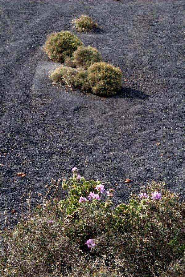 Download έδαφος ηφαιστειακό στοκ εικόνα. εικόνα από κήπος, πέταλα - 13185573