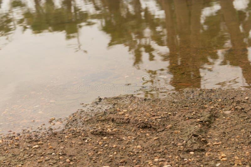 Έδαφος με ένα αμμοχάλικο εκείνες οι κεκλιμένες ράμπες κάτω στη σαφή λίμνη στοκ φωτογραφία με δικαίωμα ελεύθερης χρήσης