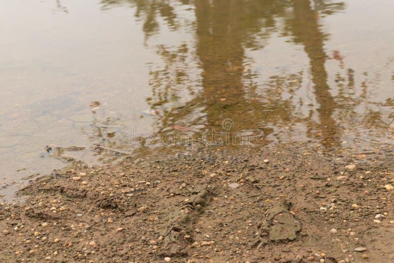 Έδαφος με ένα αμμοχάλικο εκείνες οι κεκλιμένες ράμπες κάτω στη σαφή λίμνη στοκ εικόνες
