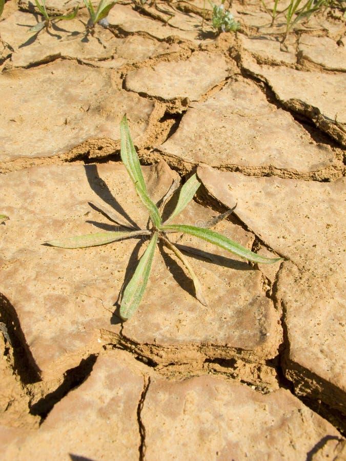 έδαφος ξηρασίας στοκ φωτογραφίες με δικαίωμα ελεύθερης χρήσης